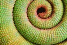 Color  / by Morgan Royalty