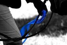 horsing around / by Anastacia George