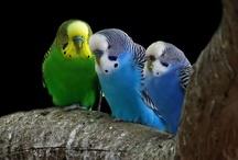 amazing animals / el maravilloso mundo animal, criaturas perfectas, cuidarlas, respetarlas.  / by Johnny Chunga