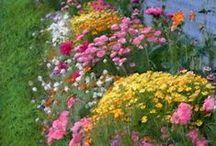 Flowers: A Touch of Heaven / by Renee Degerman
