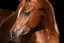 Horses & Donkeys / by Dawn Studley