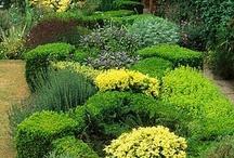 Gardening and Decor / by Jane McDonald