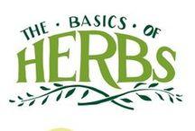 Herb Garden / by Aaryn James
