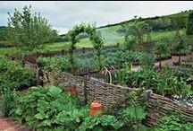 Gardening / by Elisa Allen