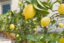 Lemon this, Lemon that... / by Aaryn James