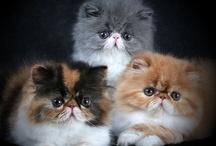 Kitty Cats / by Gayla Fredrick