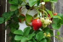 Helpful Garden Hints / by Gayla Fredrick