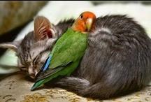 cutest cuddliest kritters / by Shannon Westbrook