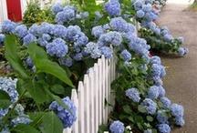 Garden, Patio, and Walkways / by Susan