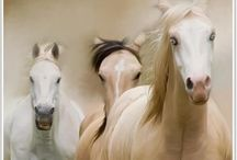 Cena's horses / A board for sister.  / by Cindy Hiatt