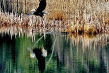 Birding in Washington State / by Jill Britt
