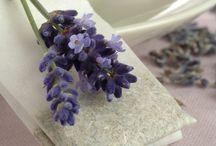 floral . LAVENDER / by Denise Mares