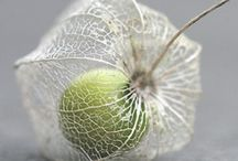 nature . SEED POD / by Denise Mares