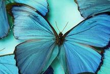 nature . BUTTERFLY / by Denise Mares