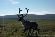 Wildlife in Sweden / by VisitSweden - Pins of Sweden