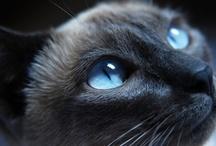 Cat / by Primitive Hare Isobel-Argante