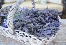 Lavender / by Primitive Hare Isobel-Argante