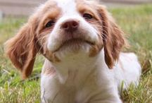 Dogs (beloved wonderful dogs...) / by Primitive Hare Isobel-Argante