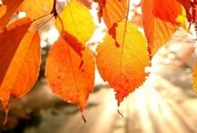 """Fabulous Fall / """"Autumn is a second spring when every leaf is a flower."""" ~ Albert Camus / by Rachel Ryan"""