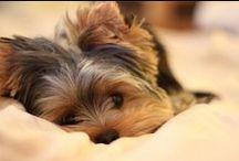 Puppies / by Alexandria Belcher