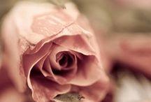 ML Blush  / by Modern Love Photo