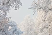 Winter Wonder Land / by Marianne Angvik
