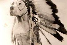 animals / by Stephanie Coker
