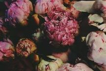 Florals / by Hannah Posey