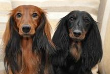 Doggies / by Kimberly Bennett Byrge