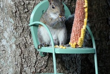 It's Those Darn Squirrels Again! / by Donna Kruder
