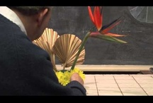Floral Videos From Rittners Floral School / Welcome into one of our classrooms at Rittners Floral School in Boston, MA. Enjoy these brief floral art demonstrations.  / by Rittners Floral School, Boston, Ma