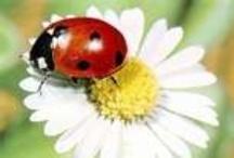 Little Lady Bugs / by Linda N Danny Polk