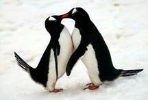 Penguins! / by Crystal Cyr