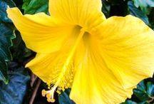 Hawaiian Islands / Images from throughout Hawaii. / by Hawaii