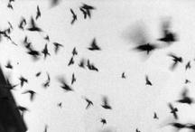 Aviary / by Dana Hopkins Barrett