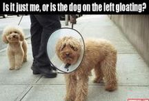 ANIMAL HUMOR / DON'T CHA JUST LOVE IT???? / by Pat Versack