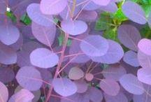 Plants / by Jennifer Moreno