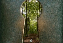 Secret Gardens / by Julie Futch