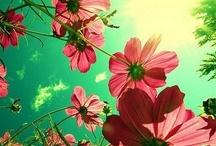 Flower Power / by Tula Jeng / Whorange
