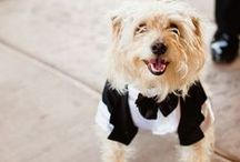 Pets in your wedding / by Trendy Bride