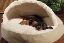 Unique Dog Products / by Trupanion.com Pet Insurance