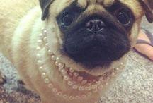 Pugs!  / Someday I will have a pug!  / by Stephanie Wynne