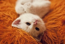 Animals ~ Cats ~ Frosty / White kitty, just like my precious Frosty. / by SE Ⓥ Grl