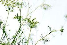 Plantas / by Eva Cruz