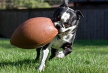 Hilarious Pet Photos / by Healthy Paws Pet Insurance