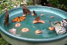 Butterfly Garden  / by Ali Nishiguchi