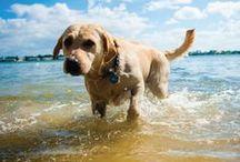 Sarasota Pets / by Sarasota Magazine