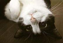 CATS ♡ / by Jody