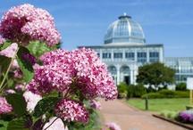 Blooming at Lewis Ginter Botanical Garden / by Lewis Ginter Botanical Garden