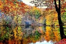Autumn Time / by Kathy Cottino